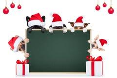 Chien de Noël comme père noël Image stock
