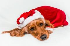 Chien de Noël dans le chapeau rouge de Santa de Noël se trouvant sur la couverture blanche Images stock
