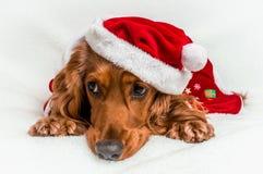 Chien de Noël dans le chapeau rouge de Santa de Noël se trouvant sur la couverture blanche Photo stock