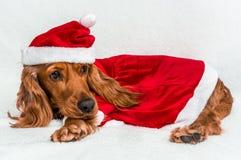 Chien de Noël dans le chapeau rouge de Santa de Noël se trouvant sur la couverture blanche Image stock