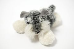 Chien de nounours Photos stock