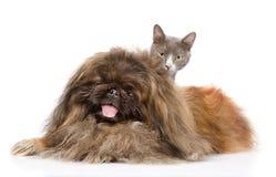Chien de pékinois avec le chat Sur le fond blanc Photo stock
