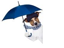 Chien de parapluie de pluie Photo stock