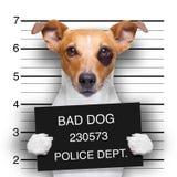 Chien de photo au commissariat de police Photographie stock libre de droits