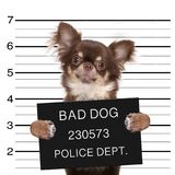Chien de photo de police Photographie stock