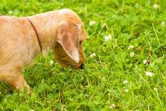 Chien de plan rapproché de terrier Photographie stock