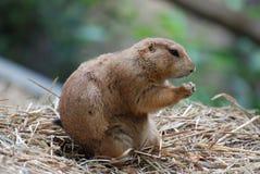 Chien de prairie adorable avec ses pattes pliées dans la prière photo libre de droits