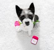 Chien de proposition de mariage avec l'anneau de mariage Photographie stock