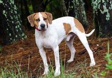 Chien de race mélangé par chien Image stock