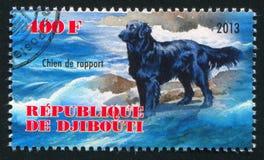 Chien de rapport dog. DJIBOUTI - CIRCA 2013: stamp printed by Djibouti, shows Chien de rapport dog, circa 2013 vector illustration