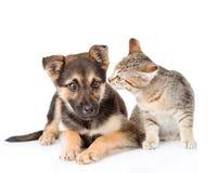 Chien de reniflement de chat D'isolement sur le fond blanc Images stock