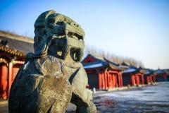 Chien de Samoyed sur la neige Photo stock