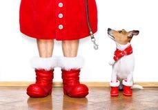 Chien de Santa Claus de Noël Image stock