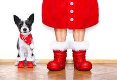 Chien de Santa Claus de Noël Photos libres de droits