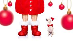 Chien de Santa Claus de Noël Photo libre de droits