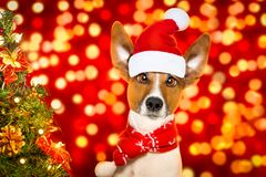 Chien de Santa Claus de Noël Photo stock