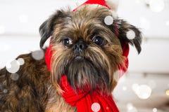 Chien de Shihtzu utilisant le chapeau de Santa Claus Année du concept de chien Photo stock