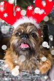 Chien de Shihtzu utilisant le chapeau de Santa Claus Année du concept de chien Images libres de droits