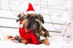 Chien de Shihtzu utilisant le chapeau de Santa Claus Année du concept de chien Image stock