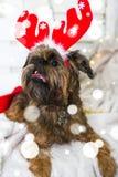 Chien de Shihtzu utilisant le chapeau de Santa Claus Année du concept de chien Photographie stock