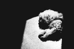 Chien de sommeil Image libre de droits