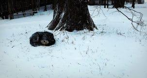 Chien de sommeil derrière l'arbre sur la neige Image libre de droits