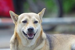 chien de sourire Photographie stock
