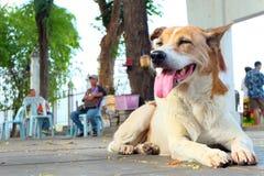 chien de sourire Photos stock