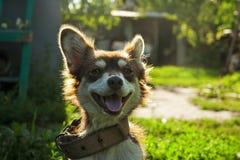 Chien de sourire mignon sur la rue photographie stock
