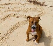 Chien de sourire sur la plage Photos libres de droits