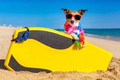 Chien de surfer photographie stock