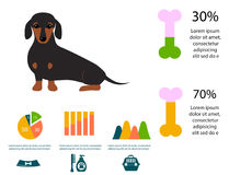 Chien de teckel jouant l'illustration plate infographic d'animal domestique de chiot de symboles de style d'ensemble d'éléments d Photo libre de droits