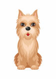 Chien de Terrier de cairn Photographie stock