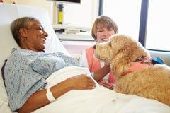 Chien de thérapie d'animal familier rendant visite au patient féminin supérieur dans l'hôpital Photos libres de droits