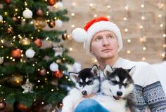 Chien de traîneau d'homme et de chiot, chapeau de Santa Claus, fin  Image stock