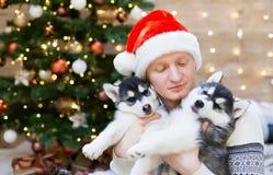 Chien de traîneau d'homme et de chiot, chapeau de Santa Claus, fin  Photos libres de droits