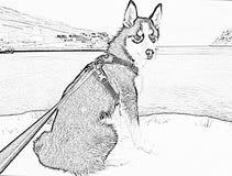 Chien de traîneau norvégien arctique - dessin au crayon photos libres de droits