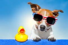 Chien de vacances d'été Images libres de droits