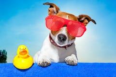 Chien de vacances d'été Photos stock