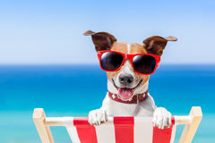 Chien de vacances d'été Photos libres de droits