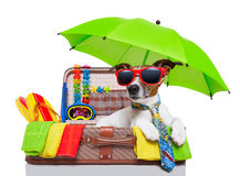 Chien de vacances d'été Image libre de droits
