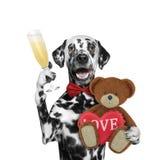 Chien de Valentine avec l'ours d'isolement sur le blanc Image libre de droits