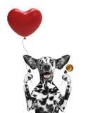 Chien de Valentine tenant le baloon de coeur Photo libre de droits
