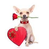 Chien de valentines Photos libres de droits