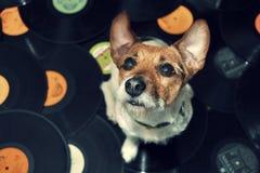 Chien de vinyle Photos libres de droits