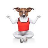 Chien de yoga Images stock