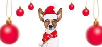 Chien des vacances de Noël Photos stock