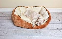 Chien dormant dans un lit de chien Photo stock