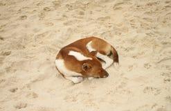 Chien dormant sur le sable Photo libre de droits
