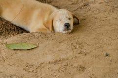Chien dormant sur le sol Foyer sélectif Photographie stock